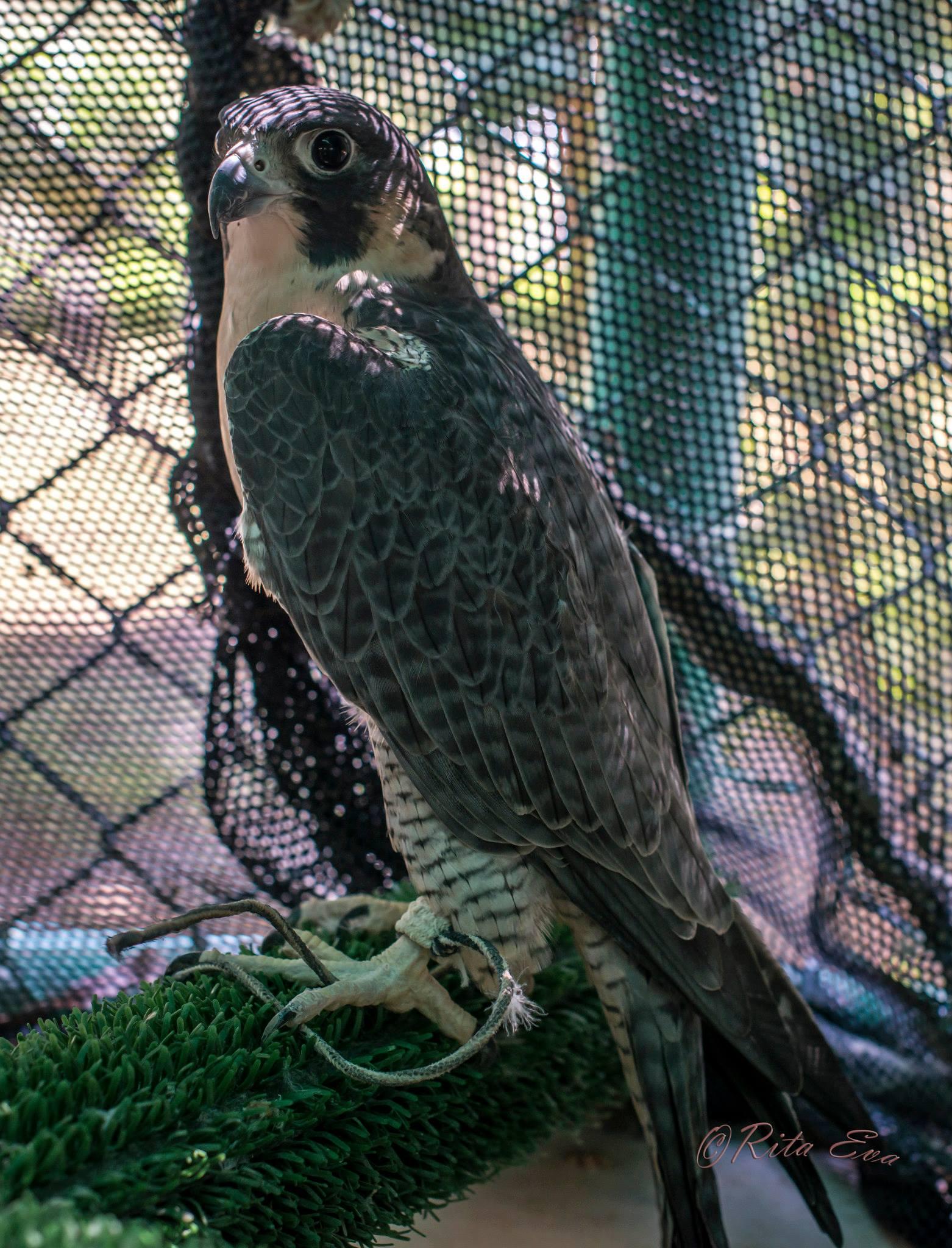 another beautiful bird ~ darker feathers